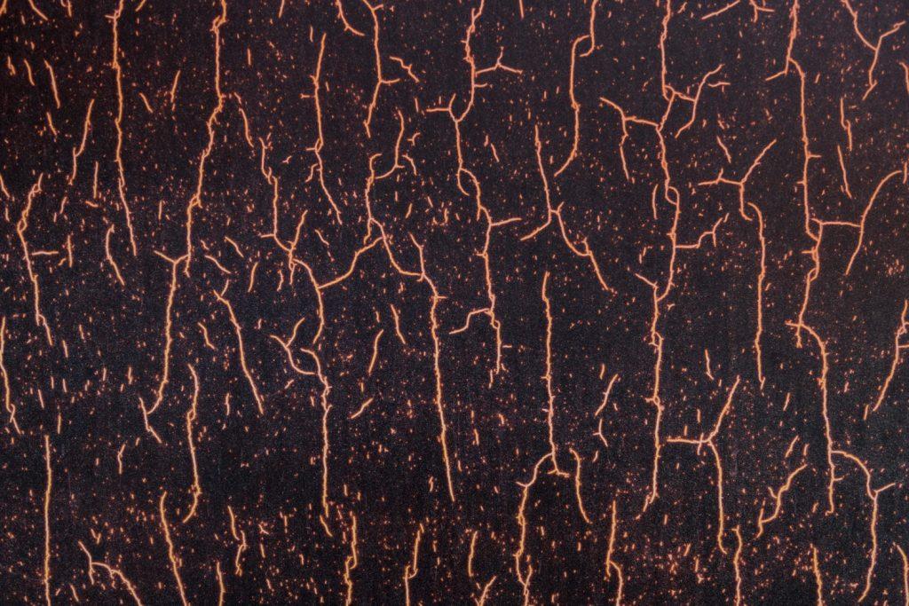 raíces podridas